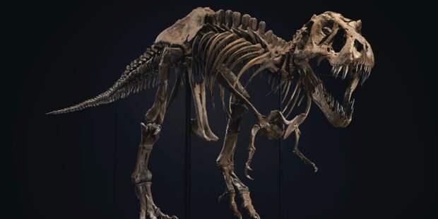 T-Rex ищет владельца