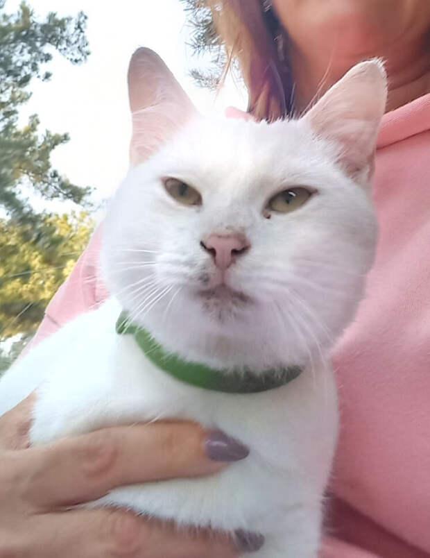 Последний белый котик