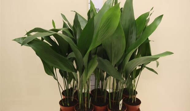Комнатные растения, которые прекрасно чувствуют себя даже в тени
