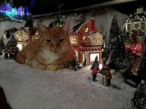 """16. """"Я думал, это для меня домик построили"""" животные, новый год, праздник к нам приходит, разрушительная сила, рождество, собаки и кошки, юмор"""