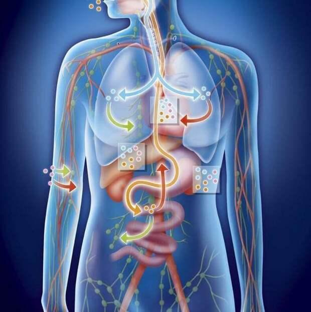 Что важно знать о кислотно-щелочном балансе