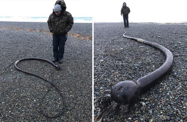 На побережье Чукотки вымыло таинственных «морских змей»