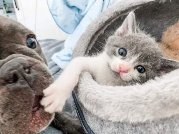 Две собаки стали нянями для котенка, который так нуждался в тепле