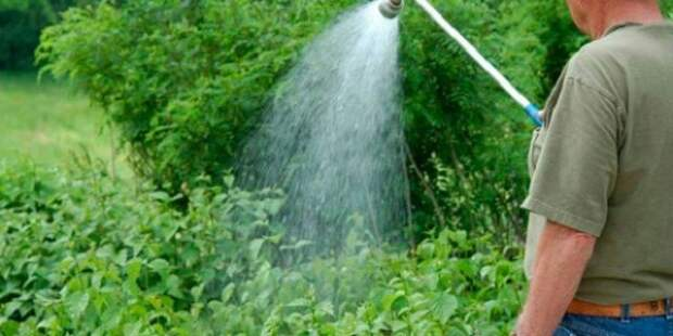 полив ремонтантной малины летом