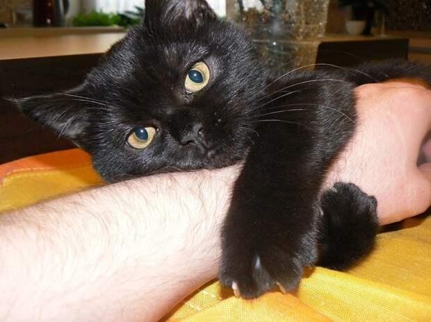 Смешные животные, которым нужно внимание хозяина прямо сейчас гифки, животные, коты, прикол