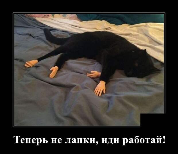 Демотиватор про кошачьи лапки