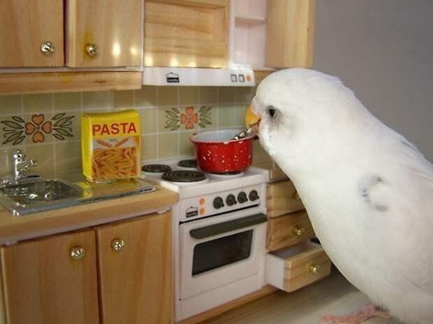 Просто один день из жизни попугая
