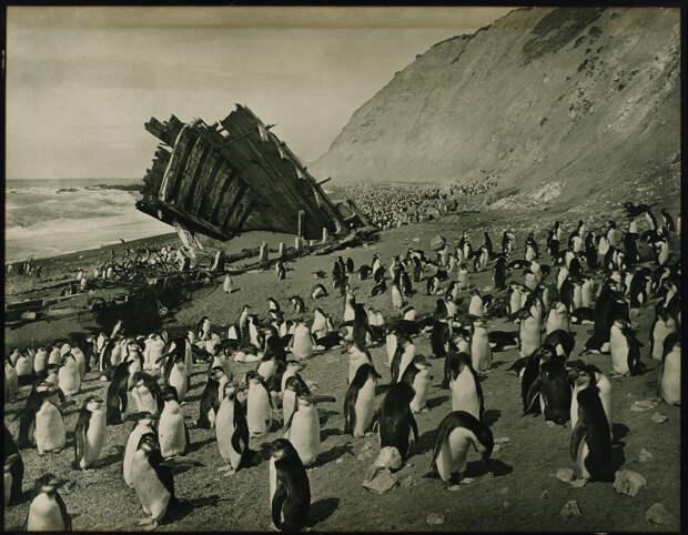 Первая Австралийская антарктическая экспедиция в фотографиях Фрэнка Хёрли 1911-1914 33