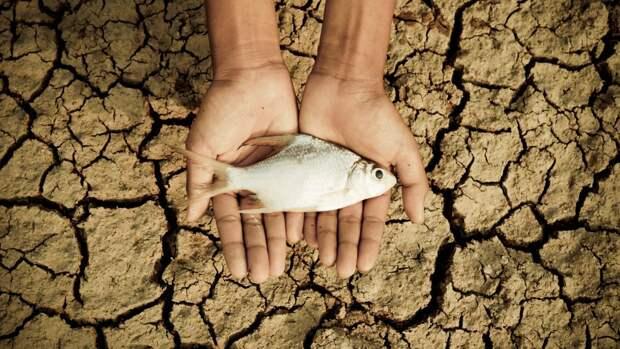 рыба засуха
