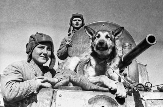 Как собаки помогали солдатам во время ВОВ