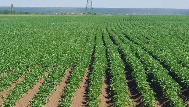 Аграрии Московской области начали посев яровых культур
