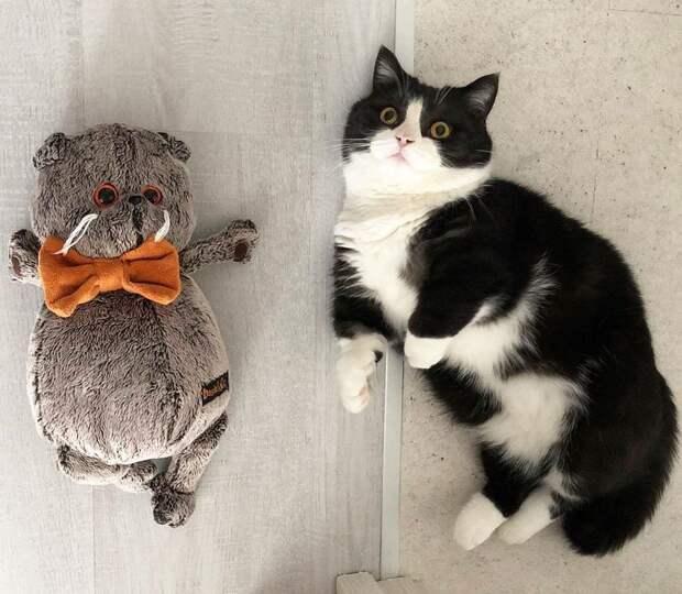 Кот из Москвы и его короткие лапки завоёвывают сердечки людей, и лучше всего у него это получается в слоу-мо