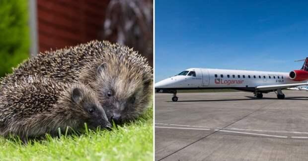 Пилот остановил самолет ради ежа
