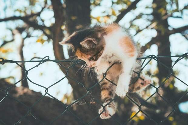 cat-5217986_960_720.jpg