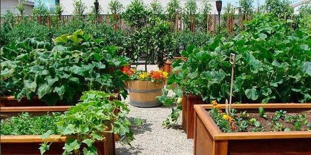 Маленькие секретики садоводу - огороднику. Добавьте себе на стену, чтобы не забыть!