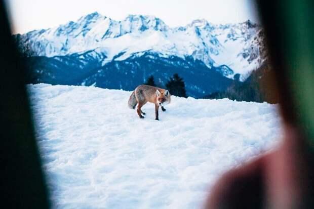 Красная Поляна (Сочи). альпинизм, горы, зима, палатка, пейзаж, рассвет, снег, туризм