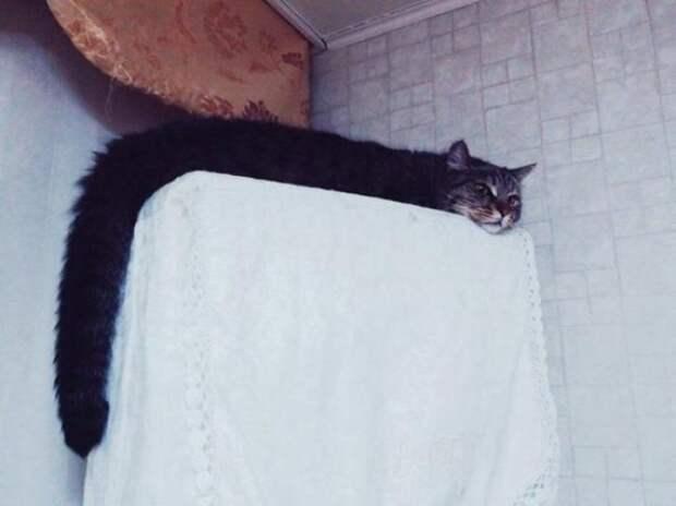 20 потрясающих котов, которые сломали систему