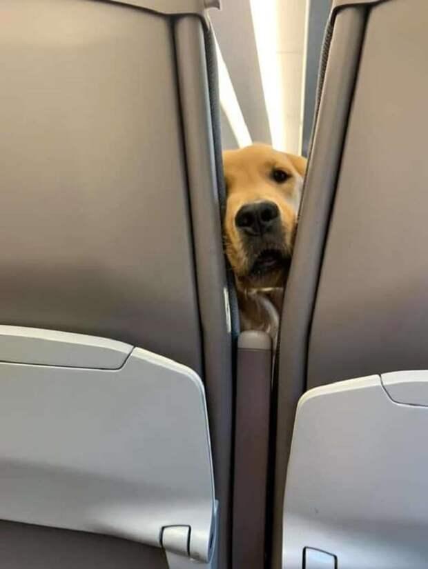 Пес скучал в самолете, пока не услышал, как хозяйка ест снеки