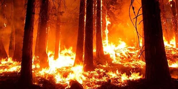 Аномальные лесные пожары в США окрасили небо в цвета апокалипсиса (фото и видео)
