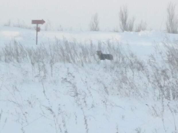 Фото автора сделано из окна дома:  декабрь 2012 года,  Малыш по-прежнему приходит к месту, где его оставил хозяин.