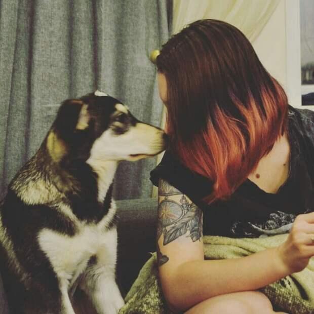 Никто не понимал, почему этого щенка редкой красоты вернули в приют собака, хаски, щенок