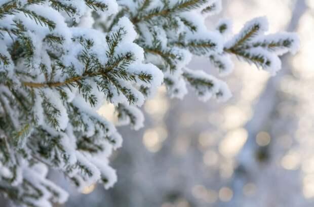 В Москве ожидается резкое потепление к Старому Новому году