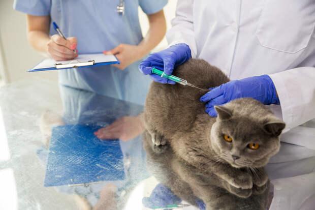 Появилась вакцина против COVID-19 для кошек, собак и других животных