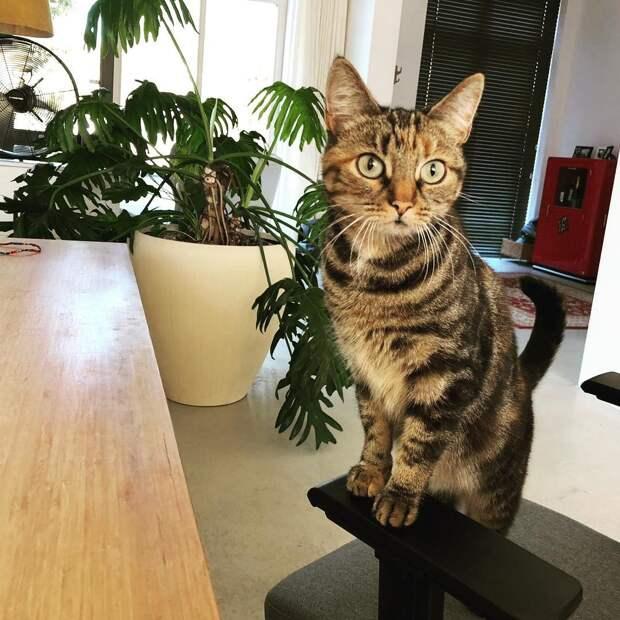 Вот почему в каждом офисе должна быть кошка или собака