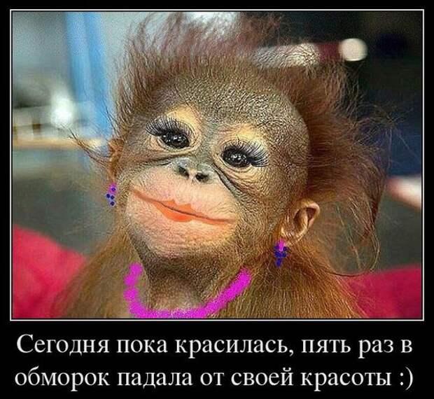 """В советское время была только одна программа про животных, она так и называлась - """"В мире животных""""..."""