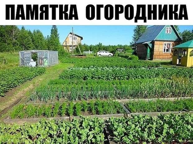 ПАМЯТКА ОГОРОДНИКА