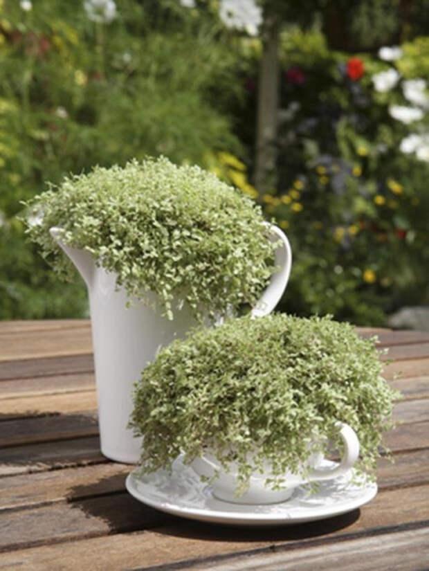 herb-garden-inspirations24-500x666 (500x666, 257Kb)