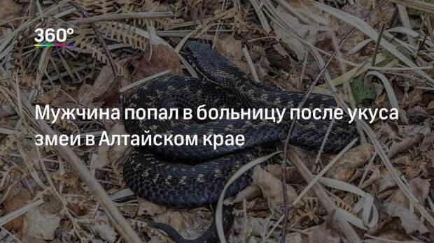 Мужчина попал в больницу после укуса змеи в Алтайском крае