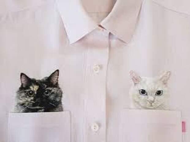 Вышитые коты