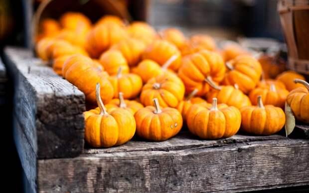 pumpkins-orange-autumn-hd-wallpaper