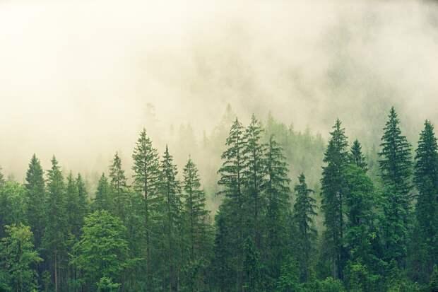 В Ижевске запретили посещение городских лесов