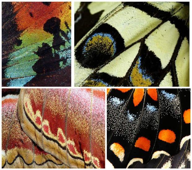 Крылья бабочек бабочки, интересное, красота, насекомые