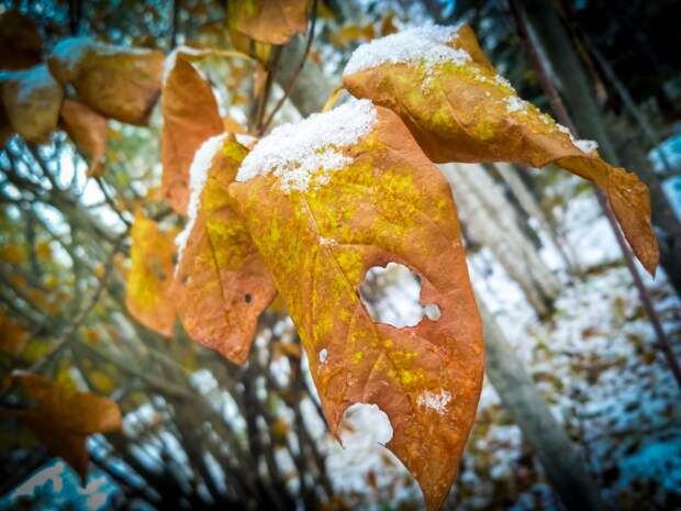 Снег без остановки и европейская зима - прогноз погоды в ноябре-2021 в Новосибирске