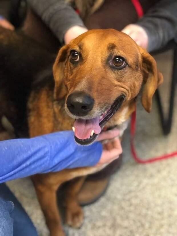 Собака ждала хозяев 525 дней в приюте, и волонтеры придумали, как ей помочь