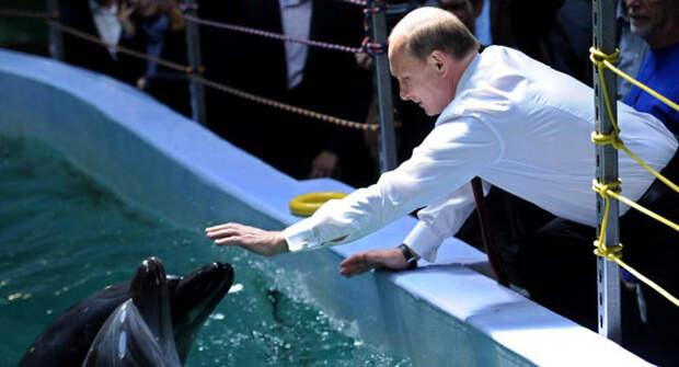 Армия России дрессирует китов-убийц, потому что всех хомяков и баранов призвал Навальный!