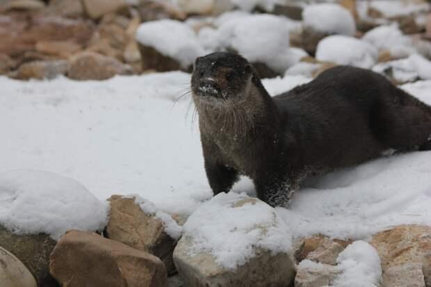 В зоопарк Удмуртии прибыла выдра Мишель, которую после рождения бросила мать