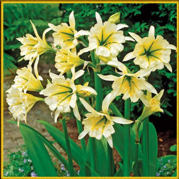 Цветы с большой серединкой