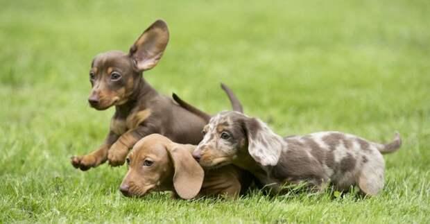 Факты о популярных породах собак