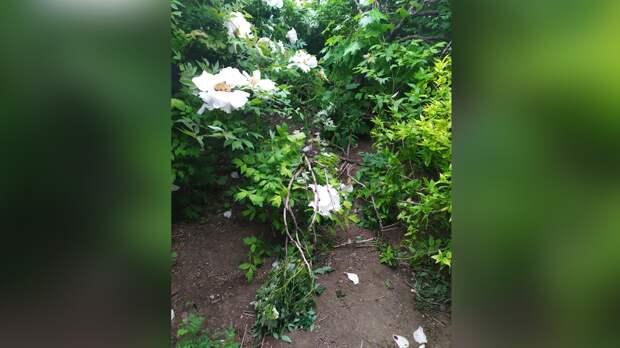 Любители «инстаграмных фоточек» затоптали уникальный сад с цветами в Крыму