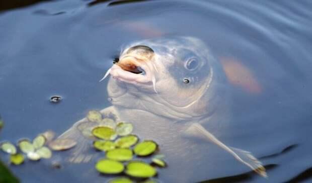 Голубев объяснил, почему возникла проблема с«рыбной» водой вРостове