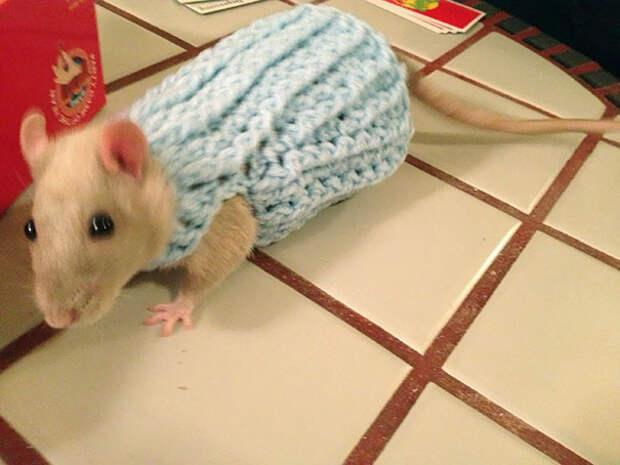 Новый свитер как раз к наступлению зимы.