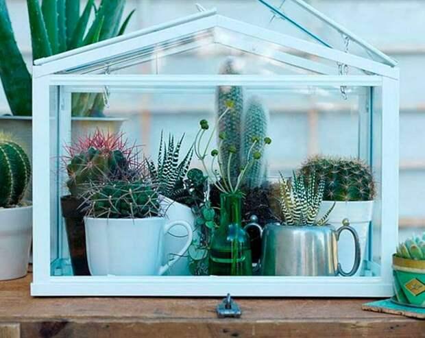 Мини-парничек для комнатных растений