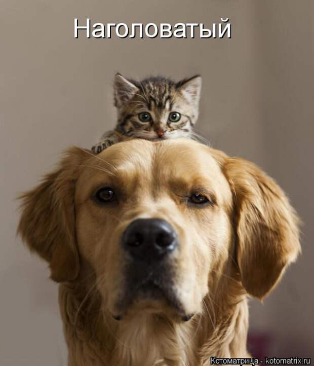 kotomatritsa_sk (600x700, 236Kb)
