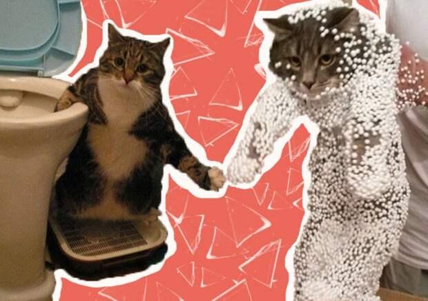 Самые смешные коты: подборка фото