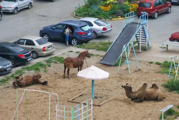 Теперь это не просто детская площадка, а еще и зоопарк!   Фото: Пикабу.