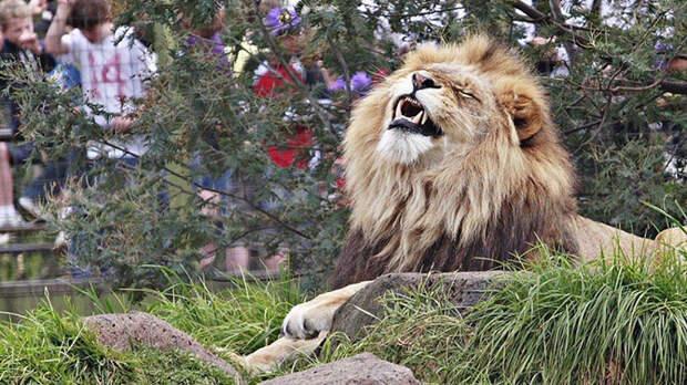Удивительные истории о людях, которые жили среди диких зверей